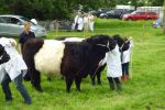 Young-Handler-line-up-Straiton-show-2014.jpg